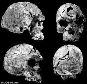 earliest human skull