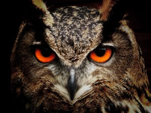 #owl-50267_640